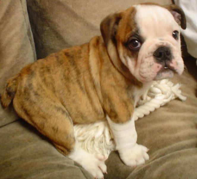 Cute Puppy Dogs: Old E...