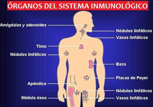 sistema inmunologico: sistema inmunologico