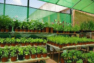 Actuaciones medioambientales en un entorno urbano 1 10 12 for Que es un vivero escolar