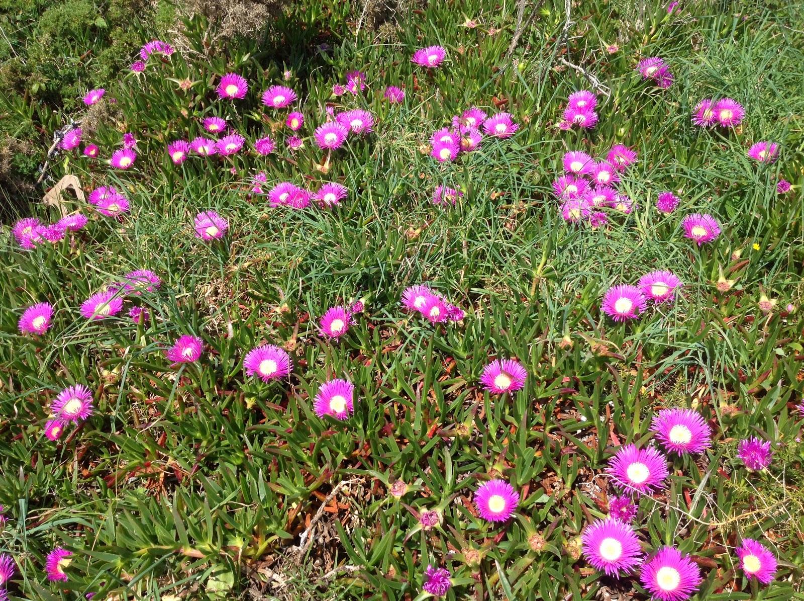 Ya es primavera en Cobres Rural