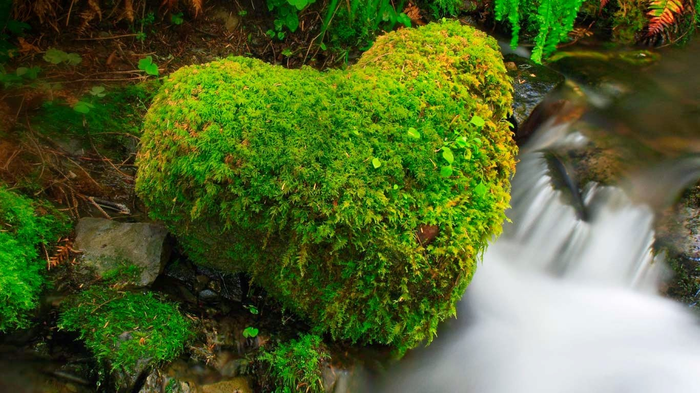 Hoh Rainforest, Olympic National Park, Washington (© ARCO/P Frischknecht/age fotostock) 564