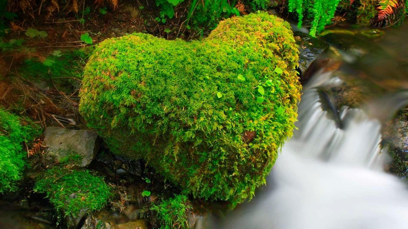 Hoh Rainforest, Olympic National Park, Washington (© ARCO/P Frischknecht/age fotostock) 564