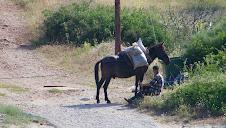 Berger et sa mule