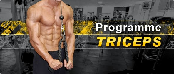 Muscle   Fitness   triceps exercices d64c72b44d2