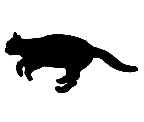 Cat Among Pixies