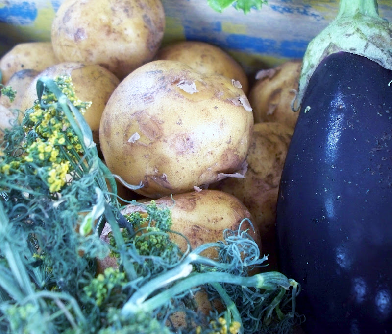 Dill, potatoes, eggplant