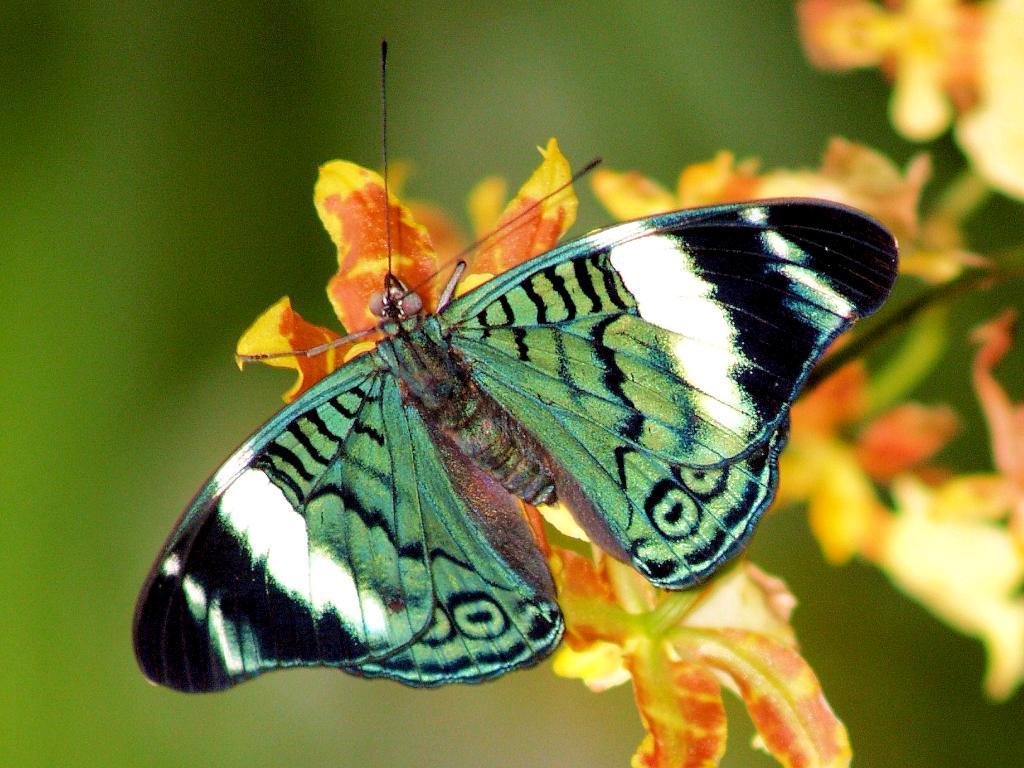 http://1.bp.blogspot.com/-NRQwiZRNvwE/UHr3kMP14xI/AAAAAAAAIGc/G9aQChrYwQI/s1600/butterfly23.jpg
