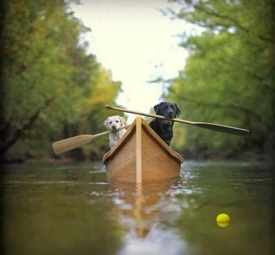 Labs in a Boat