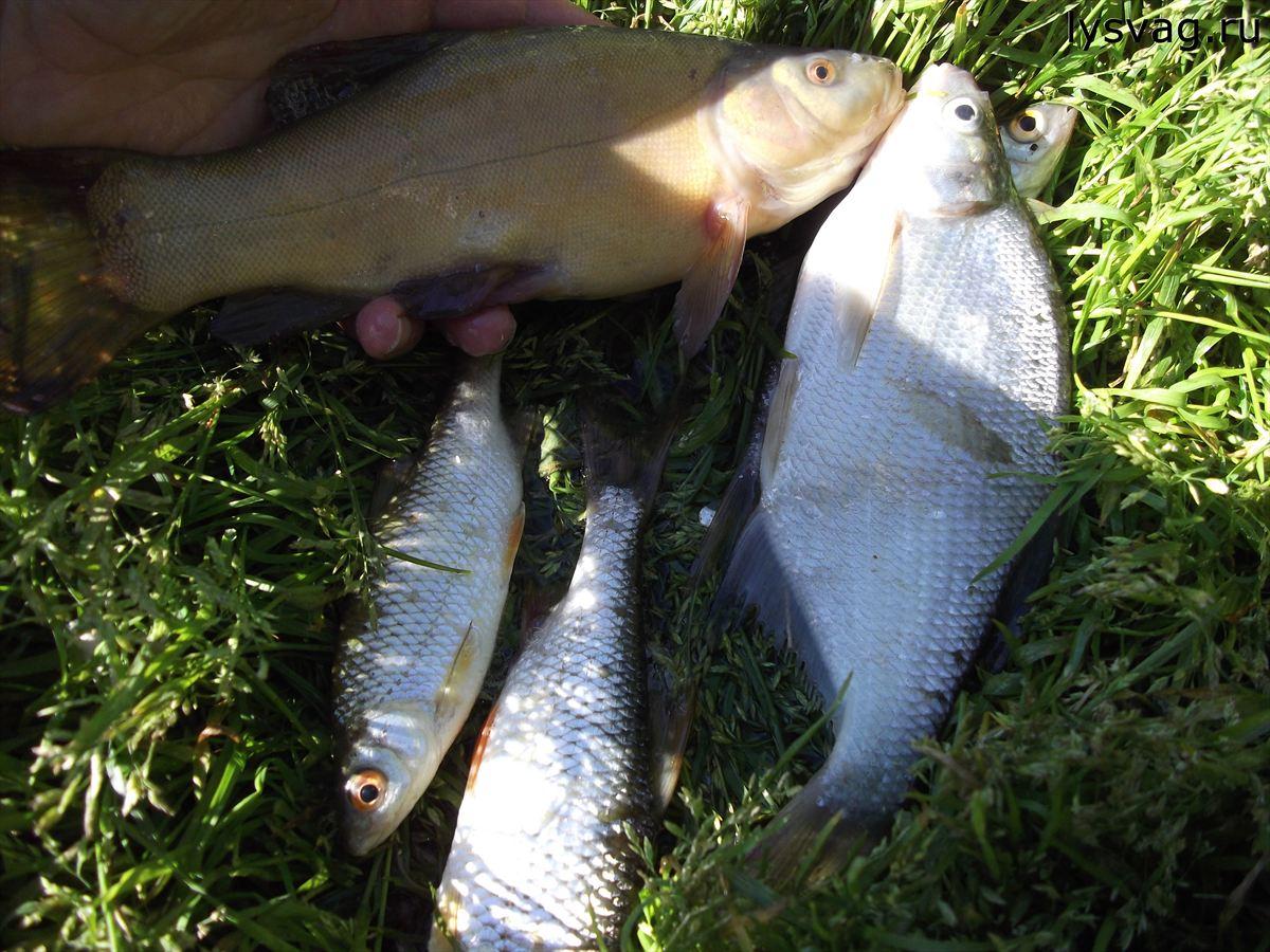 DSCF8962 Рыбалка в Лысьве. Рыбы больше нет.