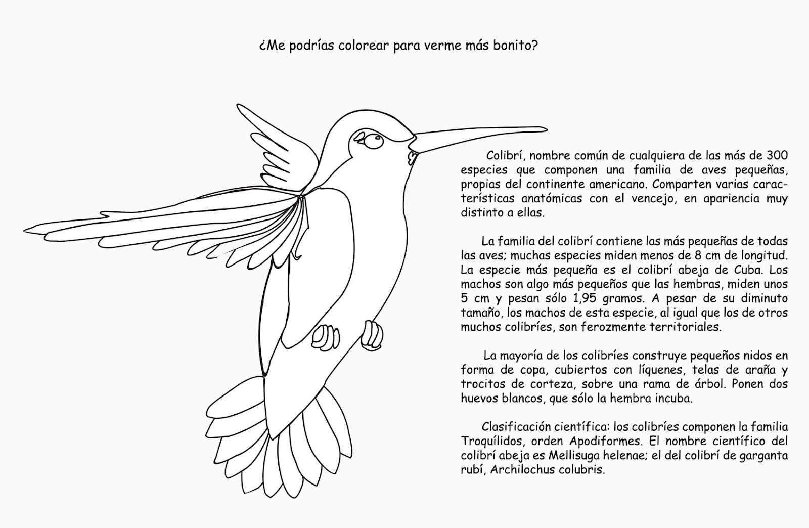 Lujoso Colibrí Imprimible Para Colorear Bosquejo - Dibujos Para ...