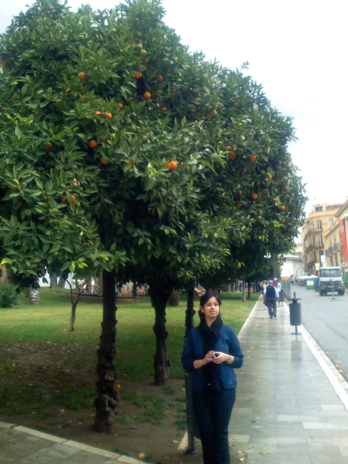 Strrets Of Malaga Spain