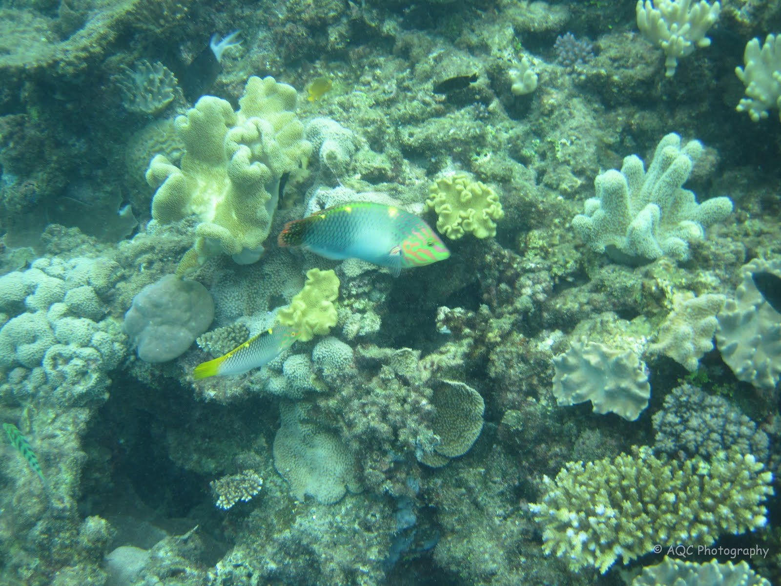 Great barrier reef fishes name that fish cheftonio 39 s blog for Great barrier reef fish