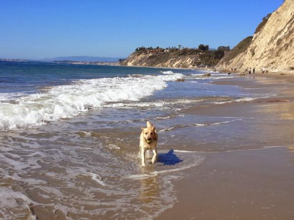 Hendrys Beach Labrador Santa Barbara