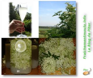 Fra chement moulu piter 20 k fir sambucus de printemps for Plante kefir