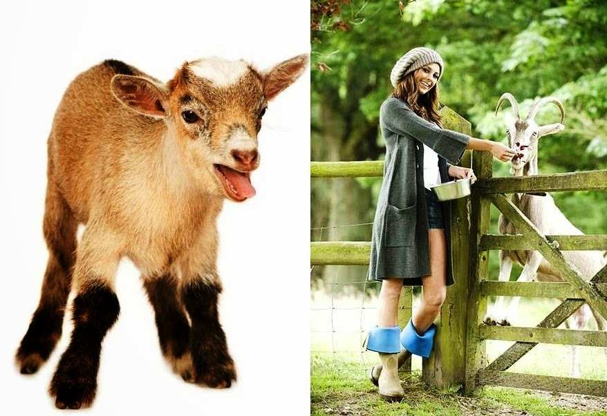 Startup Goat Farming Business