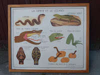 Vintage french posters animal snakes