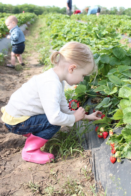 Berry Picking | Our Summer Bucket List