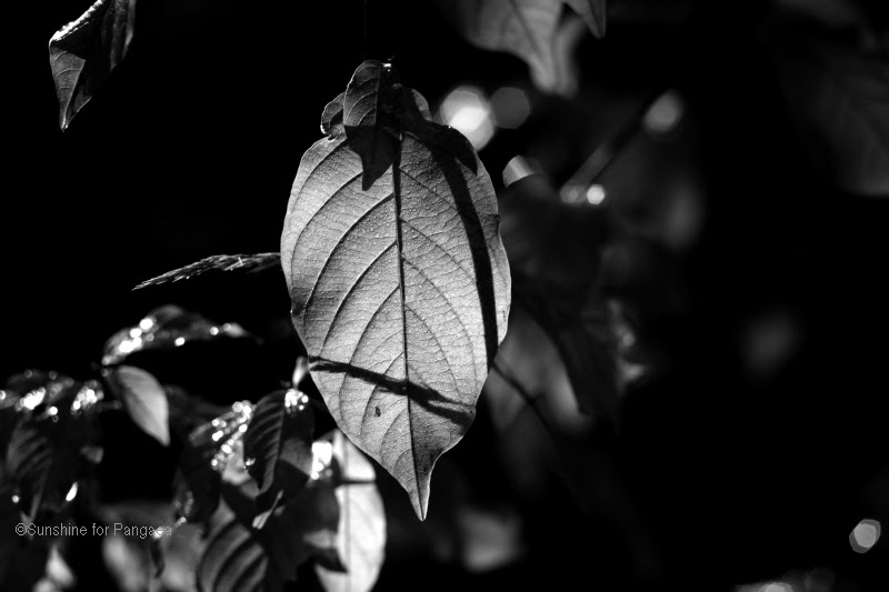 Black and white photo of a leaf in the shadow
