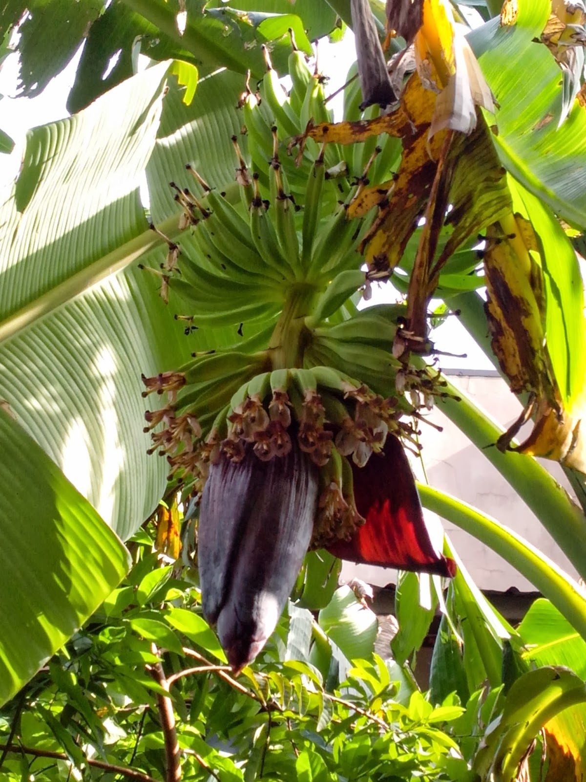invitation to smell the flowers Banana Blossom