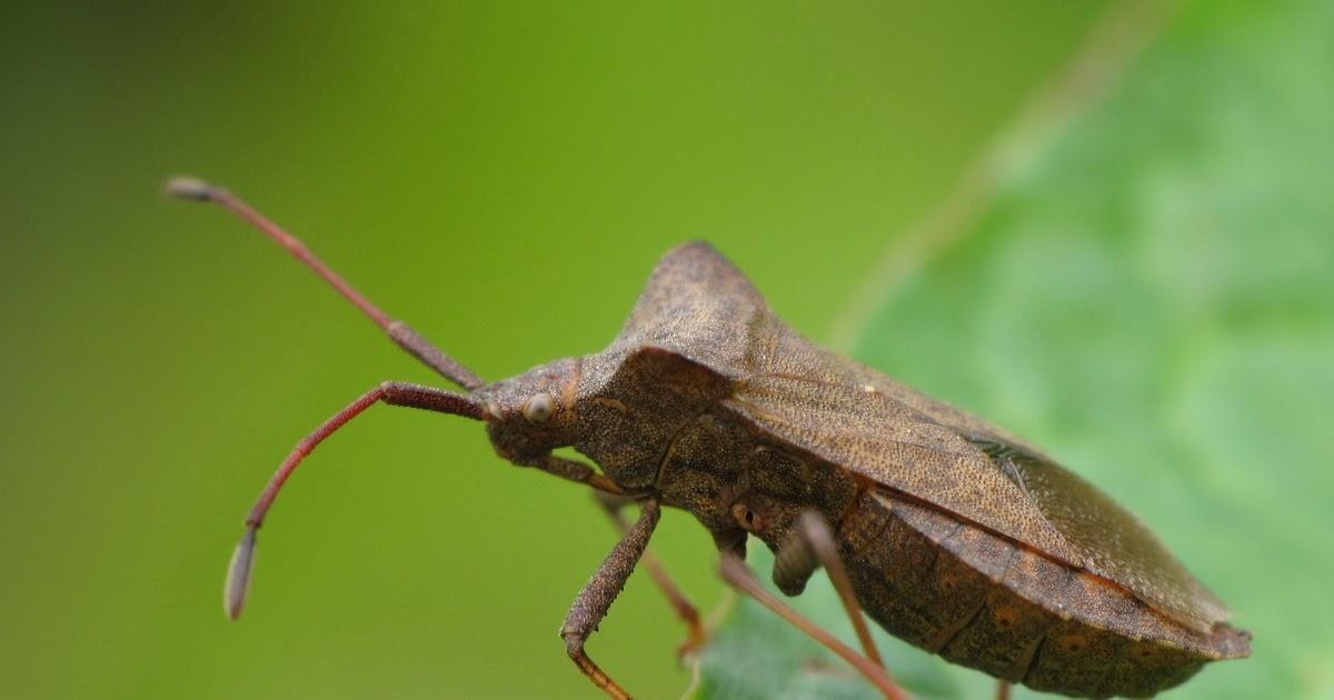 ecole de puxieux l 39 insecte de notre jardin. Black Bedroom Furniture Sets. Home Design Ideas