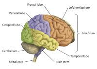 Brain Information2