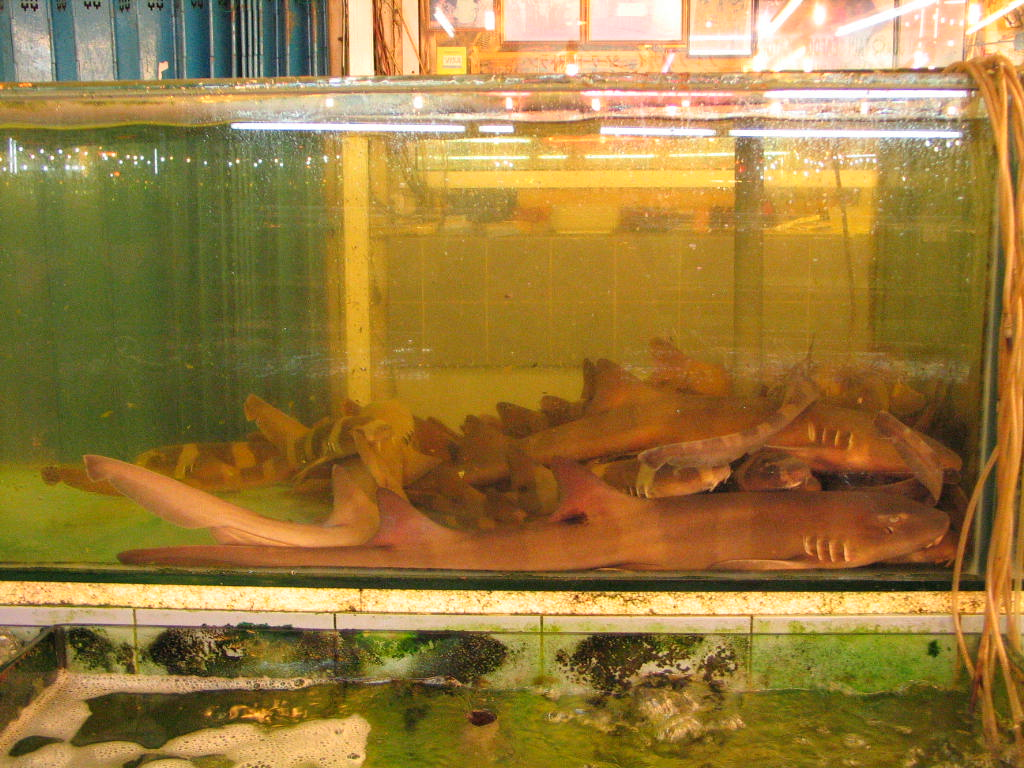 Freshwater aquarium fish for sale philippines - Baby Sharks Should Be On The Sea Not In A Restaurant S Fish Tank Photo By Gregg Yan Wwf Philippines