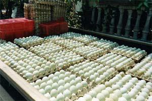 agen telur bebek surabaya