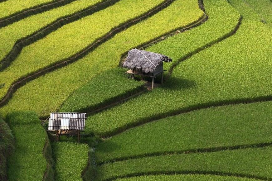 Fotografi Landscape dengan tema Sawah Tropis di Katulistiwa