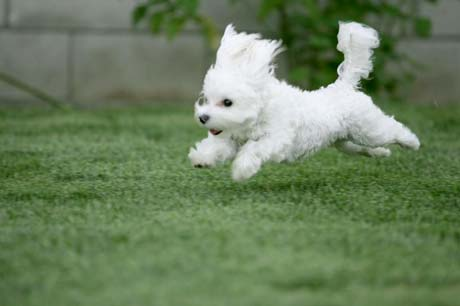 very cute puppy