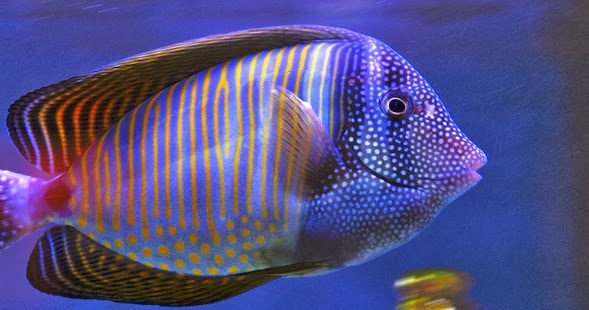Types of saltwater fish according to feeding all for Where to buy saltwater fish