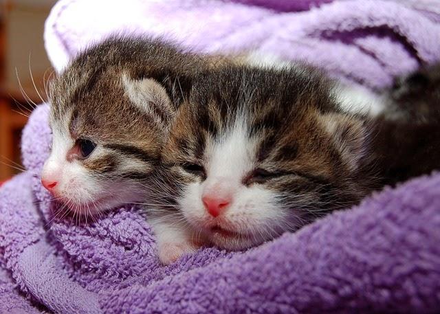 Foto Di Gatto Due Cuccioli Di Gatto