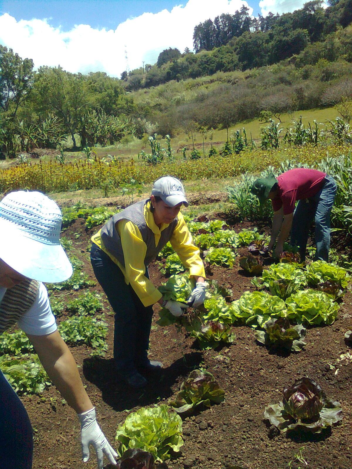 Mantenimiento y dise o de jardines cosecha del mandala - Jardines con poco mantenimiento ...