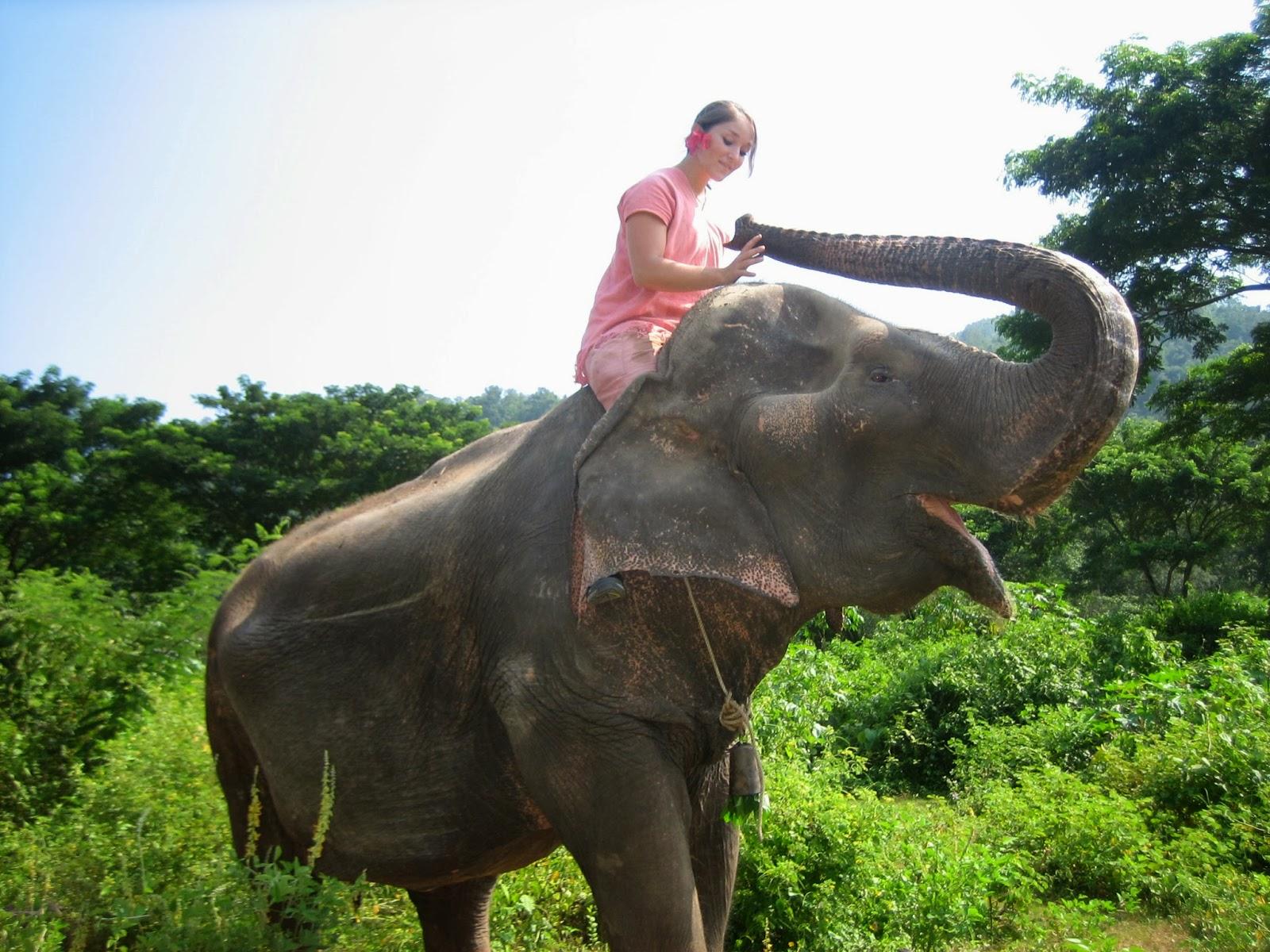 chiang-mai-elephant-trek-jumbo-camp