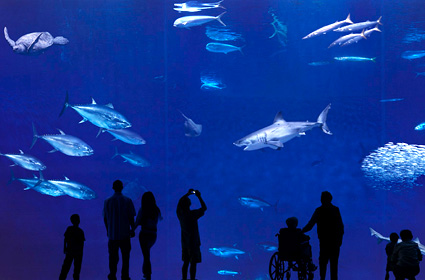 Daily News Monterey Bay Aquarium Sea Exhibition Open