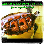 SAVE SEGARI TURTLES...