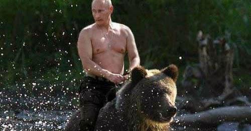 Just Plain Stupid The Bear Is Back