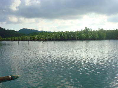 mangrove trees in Sipalay