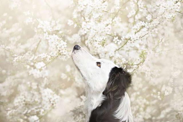 dog-photography-alicja-zmyslowska-14