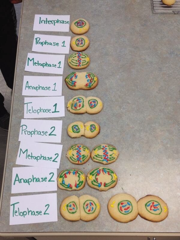meiosis lesson plans, stages of meiosis grade 9, activities to learn about the stages of meiosis, biology lesson ideas, meiosis out of cookies