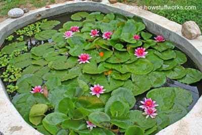Estanque con plantas flotantes al aire libre