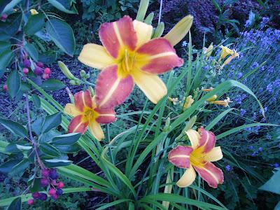 Z mojego letniego ogrodu