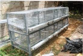 Keeping quail in cages  Quail Cage Simple Plans