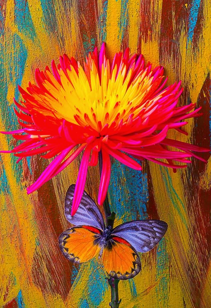 mariposas-amarillas-fotos