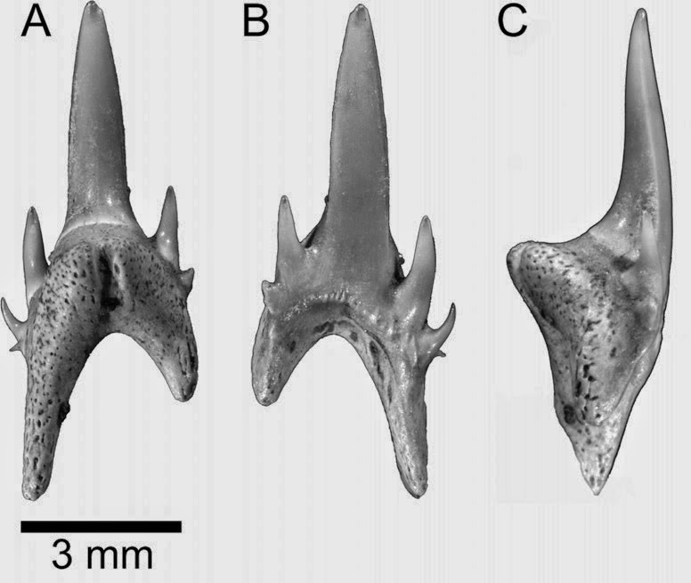 http://sciencythoughts.blogspot.co.uk/2014/12/sharks-and-rays-of-eocene-canadian-high.html
