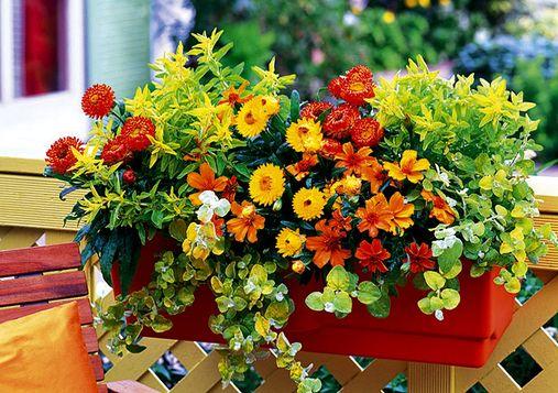 Il piacere di piante e fiori per il balcone for Fiori primaverili da balcone