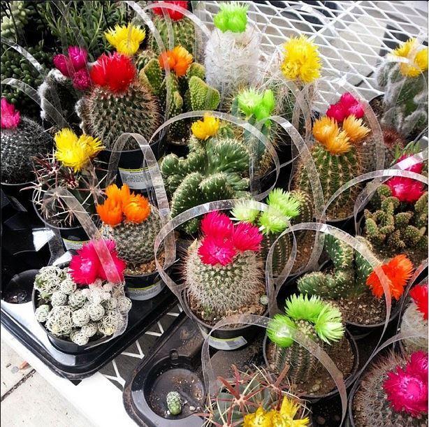 cactus+in+fake+bloom.JPG