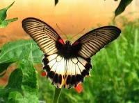 Travel Butterfly Garden (Bali Butterfly Park)
