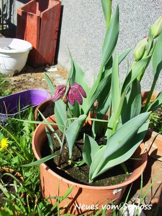 12 von 12 (April 2014)- neuesvomschloss.blogspot.de