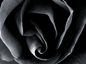 Black roses wallpaper