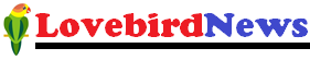 LOVEBIRD NEWS